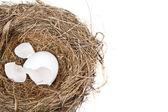 Broken Egg in Nest — Stock Photo