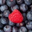 Raspberry in the middle of blueberries — Stock Photo