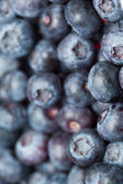 Heap of blueberries — Stock fotografie