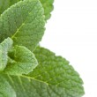 Extreme close up of mint — Stock Photo