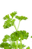Close up of blurred chervil sprigs — Stock Photo