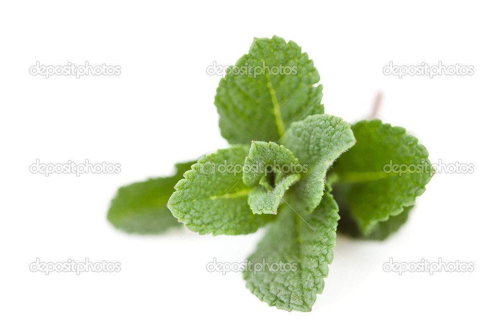 Close up of mint against a white background  Stok fotoraf #13990997