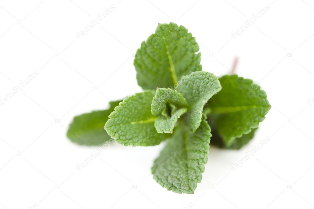 Close up of mint against a white background  Foto de Stock   #13990997