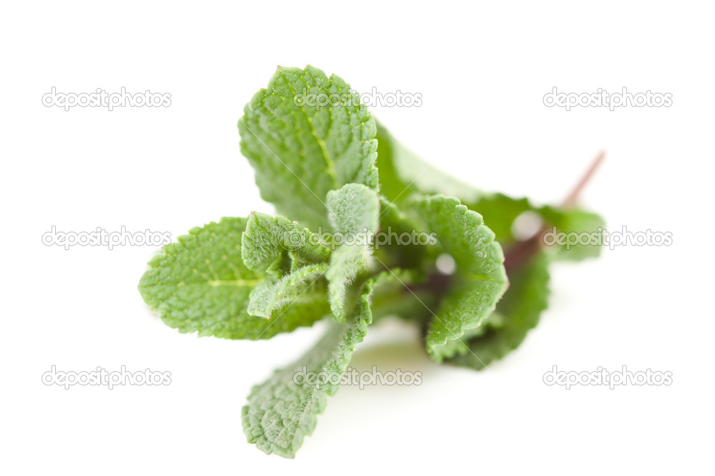 Close up of blurred mint against a white background — Stock Photo #13991000
