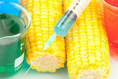 Syringe on corn — Stock Photo