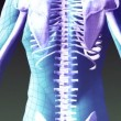 Xray animation of Human Skeleton — Stock Video