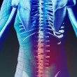 Stock Animation of Human Back — Stockvideo