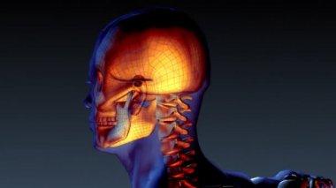 人間の骨格の x 線のアニメーション — ストックビデオ