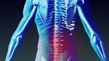 Stock Animation of Human Back — Stock Video