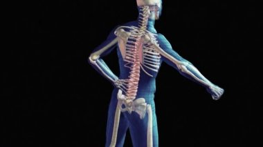 Spinal Injury — Stock Video