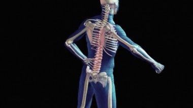 Spinal Injury — Stock Video
