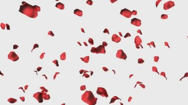 3D Animation of Rose Petals — Stock Video