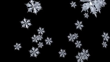 Falling Snowflake — Stock Video