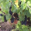 Stock Video: Harvest time in France
