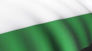 Hungarian Flag — Stock Video