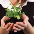Woman Holding a plant in her hand — Stock Video