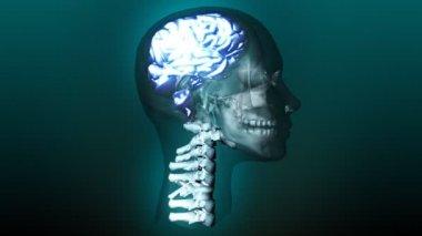 Human Brain — Stock Video