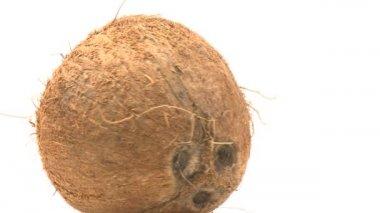 Coconut — Stock Video