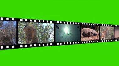 Footage Montage of Wildlife — Stock Video