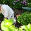 Retired man gardening - Foto Stock