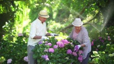 Mature couple pruning shrubs — Stock Video