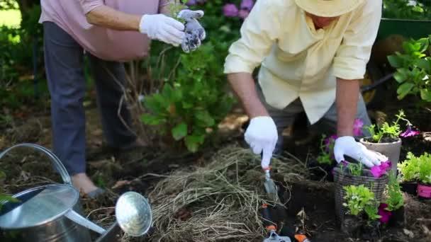 Mujer jubilada dando flor a su marido — Vídeo de stock