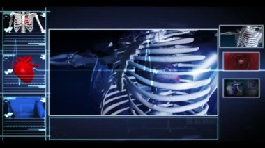 Interface showing running skeleton with pumping heart and vein interior — Stock Video