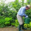 Stock Video: Mwatering his plants