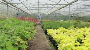 Gardener and grandchild walking through greenhouse — Stock Video
