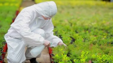 Gardener wearing protection suit spraying the plants — Stock Video