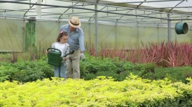 Little girl watering plants with her granddad — Stock Video