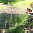 Mother and daughter nourishing ducks — Vídeo de stock