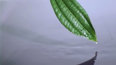 Drop water slipping in super slow motion from the leaf — Stock Video