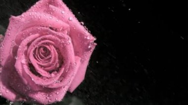 Raindrops in super slow motion flowing on a rose — Stock Video