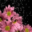Stock Video: Downpour in super slow motion falling on beautiful flowers