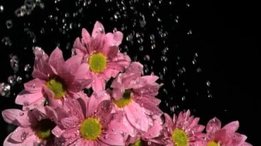 Downpour in super slow motion falling on beautiful flowers — Stock Video