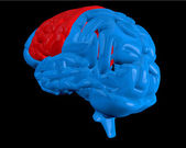 Blue brain with highlighted cerebrum — Stock Photo