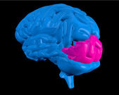 Blue brain with highlighted occipital lobe — Stock Photo
