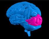 Modrý mozek s zvýrazněné týlní lalok — Stock fotografie