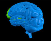 Blue brain with highlighted frontal lobe — Stock Photo