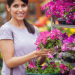 Black-haired woman holding pink flowers in garden center — Stock Photo