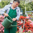 Foto Stock: Gardener watering plants