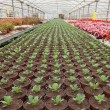Seedlings in greenhouse - Stock Photo