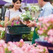 Womwith basket buying plants — Stock Photo #23086652