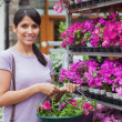 Woman buying pink flowers — Stock Photo #23086660
