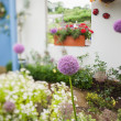 Garden with a lot of flowers — Stock Photo