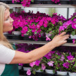 Employee taking flowers from the shelf — Stock Photo
