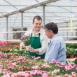 Man and employee looking at flowers in greenhouse — Stock Photo