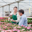 Stock Photo: Man and employee looking at flowers in greenhouse
