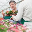 Employee holding a box of flowers as customer is looking at them — Stock Photo